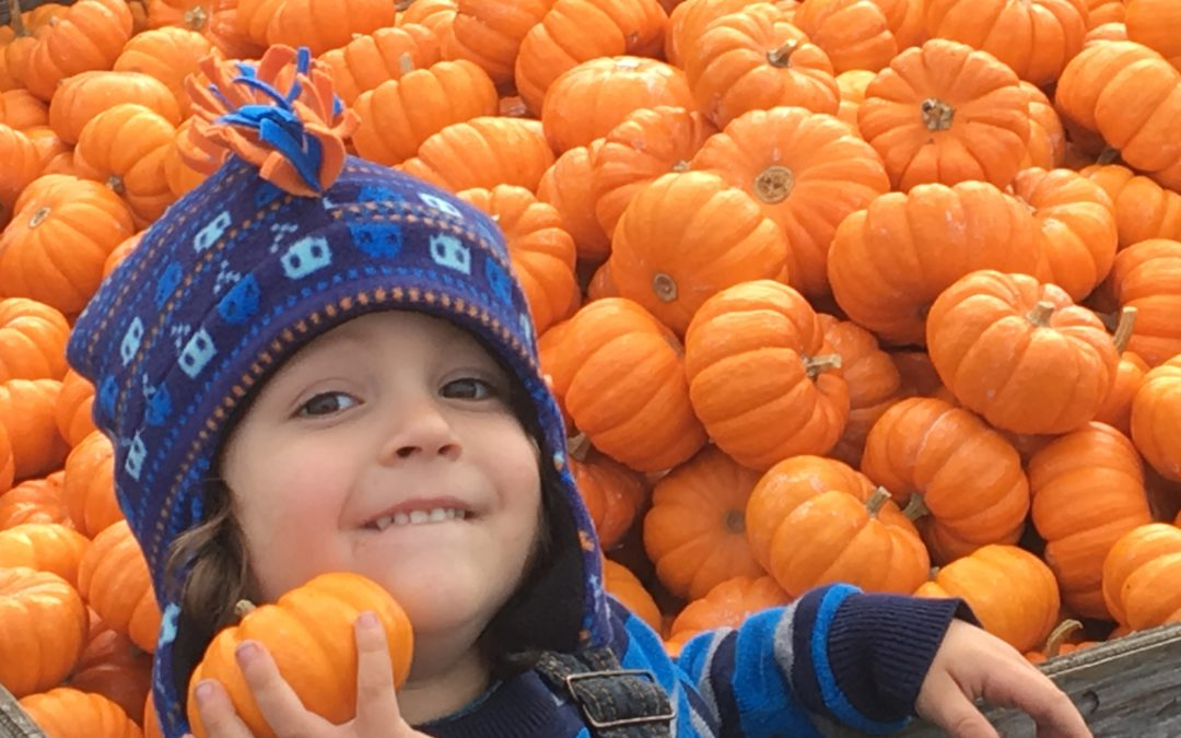 Packer Pumpkin Patch – Hours of fun activities.